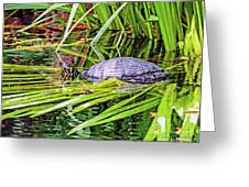 Turtle Pond Greeting Card