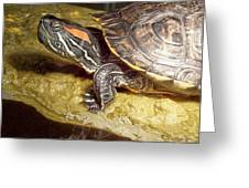Turtle Reflections Greeting Card by Deleas Kilgore