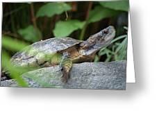 Turtle Rock Greeting Card