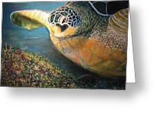 Turtle Run Greeting Card