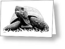 Turtle Greeting Card