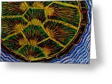 Turtle Shell Mandala Sparkle Greeting Card