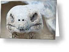 Turtle Smile  Greeting Card