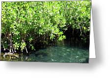 Turtle Swim Greeting Card