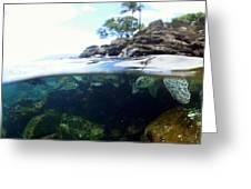 Turtle Tide Greeting Card
