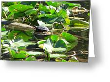 Turtle Town Greeting Card