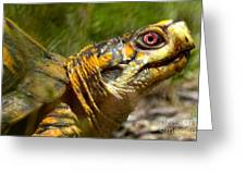 Turtle-turtle Greeting Card by Stephanie  Varner