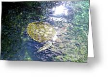 Turtle Water Glide Greeting Card