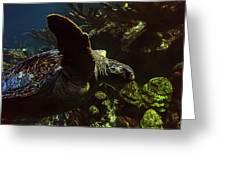 Turtle Wave Greeting Card