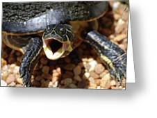 Turtle With His Mouth Wide Open  Greeting Card