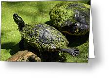 Turtle Yoga Greeting Card
