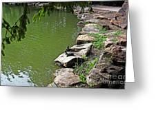 Turtles 7832 Greeting Card