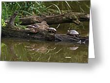 Turtles And A Duck Greeting Card