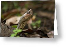 Turtle's Neck  Greeting Card