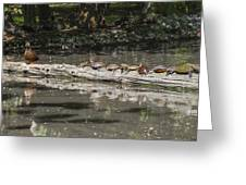 Turtles Sunning On A Log Greeting Card