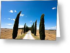 Tuscan Cypress Landscape Greeting Card