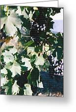 Tuscan Grapes Photograph Greeting Card