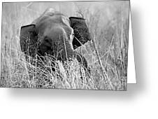 Tusker In The Grass Greeting Card