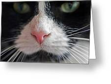 Tuxedo Cat Whiskers And Pink Nose Greeting Card