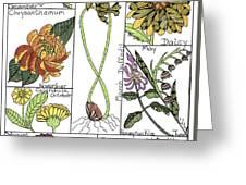 Twelve Month Flower Box Greeting Card by Barbara McConoughey
