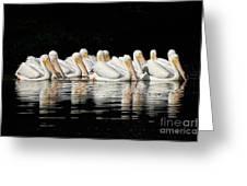 Twelve White Pelicans On A Dark Background. Greeting Card