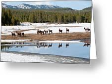 Twice The Elk Greeting Card