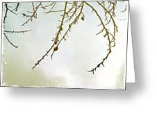 Twigs And Winter Sky Two Greeting Card