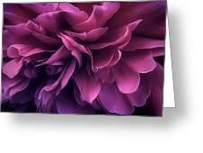 Twilight Breeze Greeting Card
