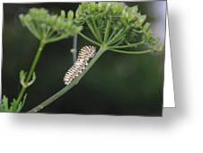 Twilight Caterpillar Greeting Card