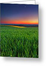 Twilight Fields Greeting Card