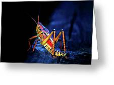 Twilight Grasshopper Greeting Card