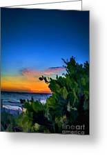 Twilight Mangrove Greeting Card