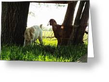 Twilight On The Farm Greeting Card