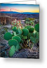 Twilight Prickly Pear Greeting Card