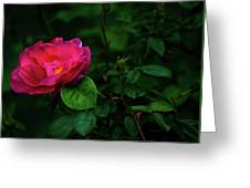 Twilight Rose Greeting Card