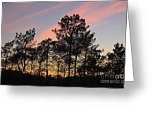 Twilight Tree Silhouettes Greeting Card