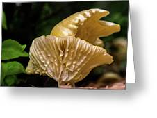 Twin Cantharellus Greeting Card