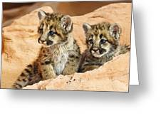 Twin Cougar Kittens Greeting Card