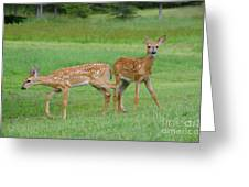 Twin Fawns Playing Greeting Card