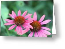 Twin Flowers Greeting Card