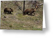 Twin Grizzlies-signed-#3299 Greeting Card