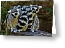Twin Lemurs Greeting Card