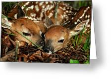 Twin Newborn Fawns Greeting Card