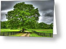 Twin Oaks Drive Southern Living Greeting Card
