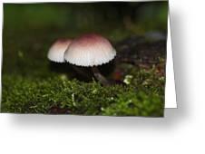 Twin Peaks - Pink And White Mushroom Duo Greeting Card