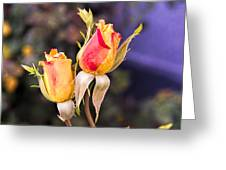 Twin Roses Of Love Greeting Card