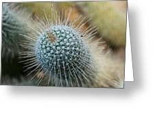 Twin Spined Cactus Greeting Card