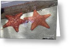 Twin Stars Greeting Card