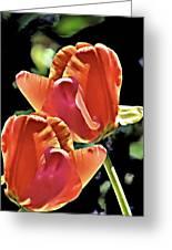 Twin Tulips Greeting Card