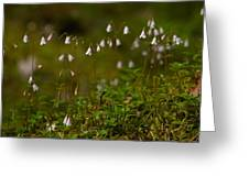 Twinflower Greeting Card